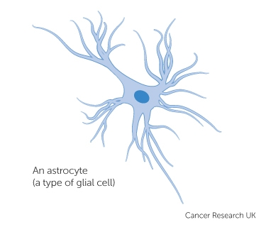 Diagram of an astrocyte - type of glial cell