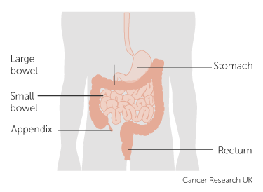 Diagram showing the position of the appendix