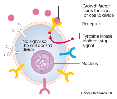 Diagram showing how growth factor inhibitors stop the signal inside the cell