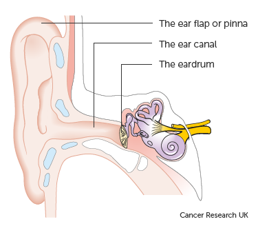 Diagram showing the parts of the outer ear