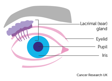 Diagram showing the structures around the eye