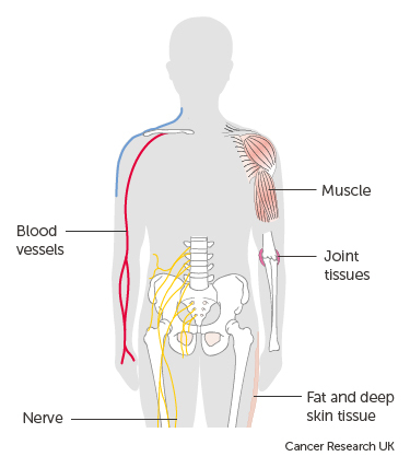 diagram of the soft tissue in the body